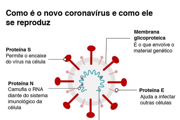 Figura 1: Estrutura do vírus SARS-CoV-2