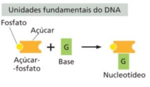 Nucleotídeos do DNA